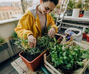 Tallinna Rahvalikoolis saad õppida, kuidas maitsetaimi ja köögivilju edukalt kasvatada toas aknalaual, rõdul või terrassil.