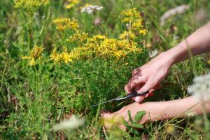 Taimetarkus on parajalt keeruline ja nüansirikas. Koolitusel jagab Irje Karjus oma teadmisi ja kogemusi taimedest, mis aitavad talvisel perioodil tervist tugevdada ja parandada.