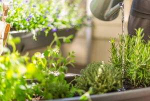 Keskkonnateadlik tarbeaed pisipinnal kursuse juhendaja Eva Luigas julgustab ka väiksematel pindadel endale toidutaimi kasvatama.